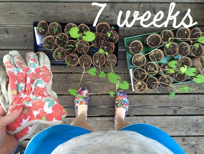 Preg-7weeks